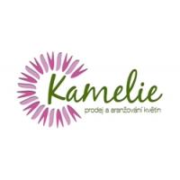 Kamelie – prodej a aranžování květin