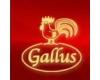 Penzion Gallus
