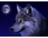 Vlkův deníček
