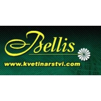 Bellis – Lenka Něničková