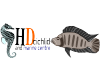 HD Cichlid and Marine Centre