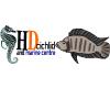 HD Cichlid and Marine Centre