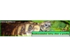 Suchozemské želvy - chov a prodej
