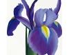 Květiny – Dáša Jeřábková
