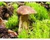 Jedlé a jedovaté houby našich lesů